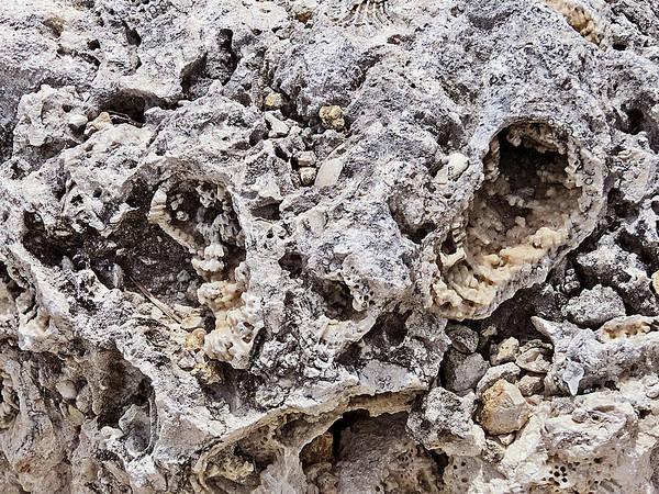 Photograph - Fossil Rock Abstract 11 by Bob Slitzan