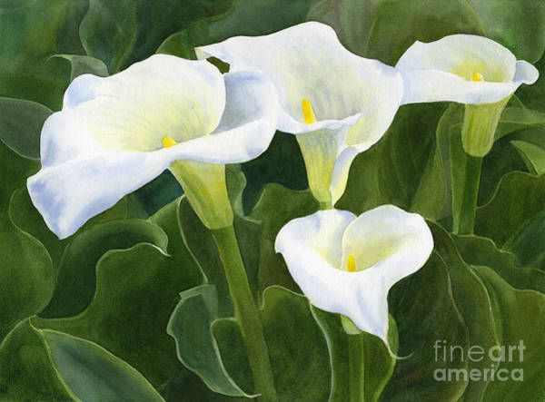 White Lily Painting - Four Calla Lily Blossoms With Leaves by Sharon Freeman