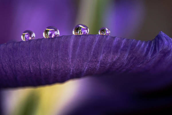 Photograph - Four Drops by Wolfgang Stocker