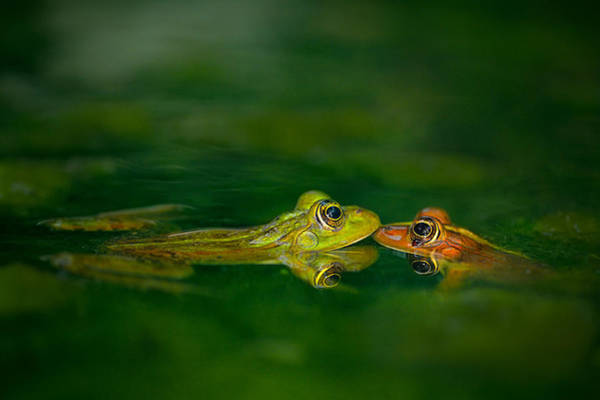 Frog Photograph - Four Eye Meeting by Tomer Yaffe