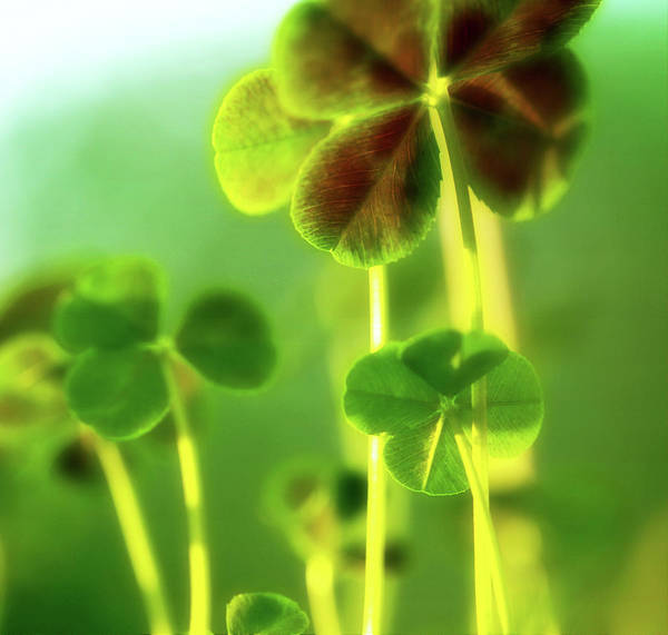 Four Leaf Clover Photograph - Four Leaf Clover by Bonnie Bruno