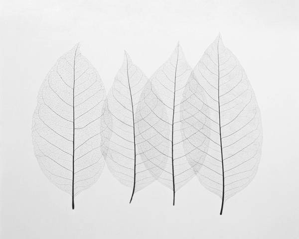 Office Photograph - Four Leafs by BONB Creative