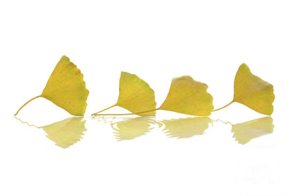 Wall Art - Photograph - Four Leaves by Delphimages Photo Creations