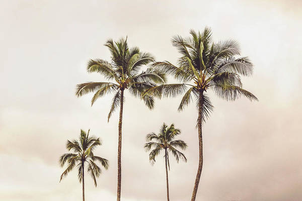 Photograph - Four Palms II by Mercedes Noriega