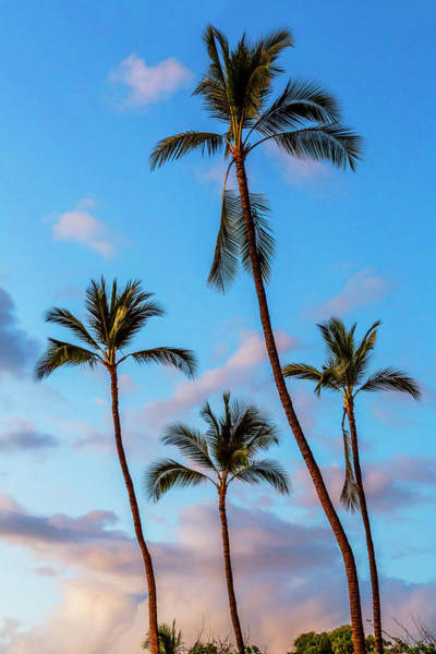 Wall Art - Photograph - Four Palms by Kelley King