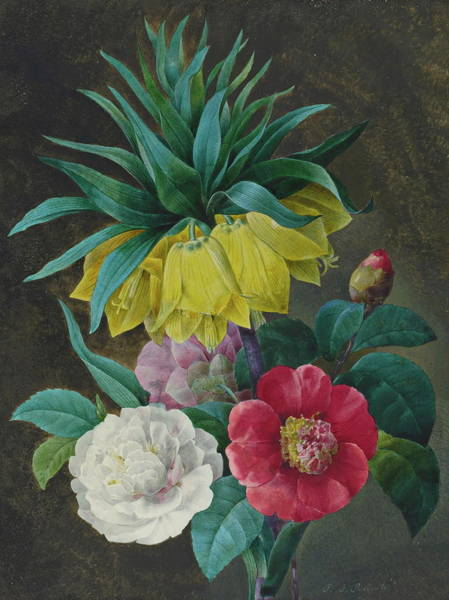 Crown Imperial Painting - Four Peonies And A Crown Imperial by Pierre Joseph Redout