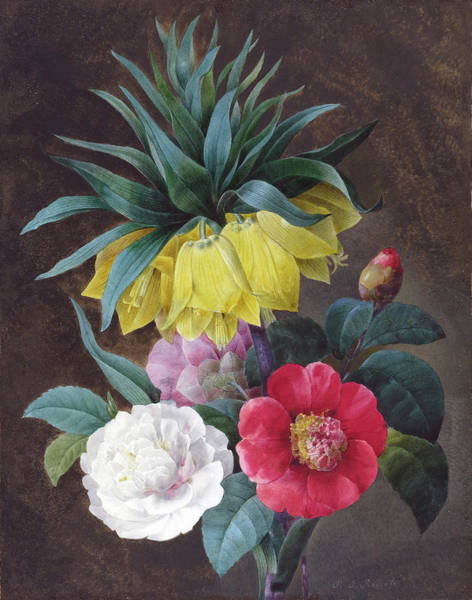 Crown Imperial Painting - Four Peonies And A Crown Imperial by Pierre Joseph Redoute