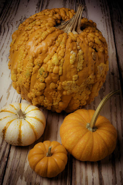 Knucklehead Wall Art - Photograph - Four Pumpkins by Garry Gay