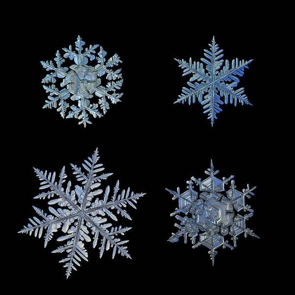 Four Snowflakes On Black Background Art Print