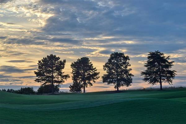 Wall Art - Photograph - Four Trees At Sunset by Mary Ann Artz