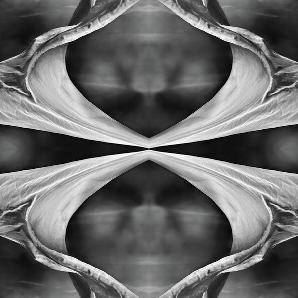 Wall Art - Photograph - Four Winds Bw by Laura Fasulo