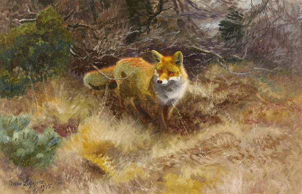 Swedish Painters Wall Art - Painting - Fox And Landscape by Bruno Liljefors