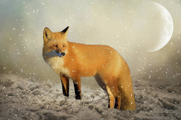 Painting - Fox In The Snowstorm - Painting by Ericamaxine Price