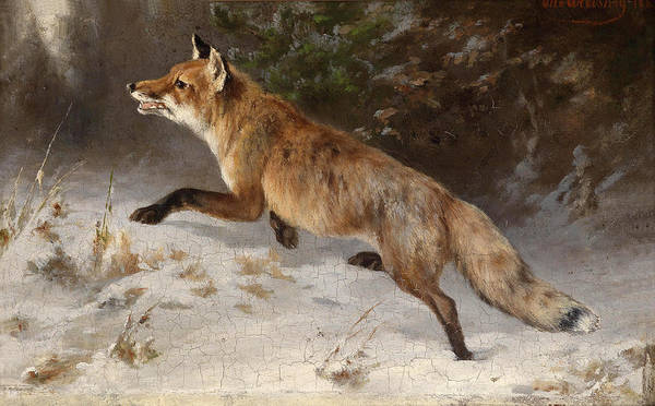 Wall Art - Painting - Fox In The Winter Forest by Otto Grashey