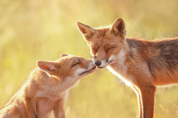 Cute Overload Photograph - Fox Love Series - World Friendship Day by Roeselien Raimond