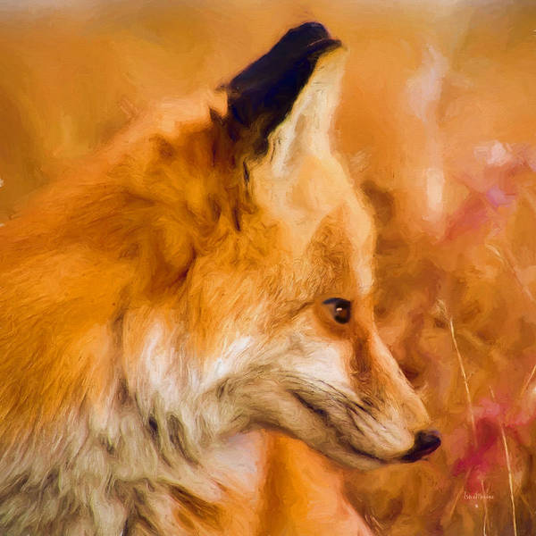 Photograph - Fox Profile - Painting by Ericamaxine Price