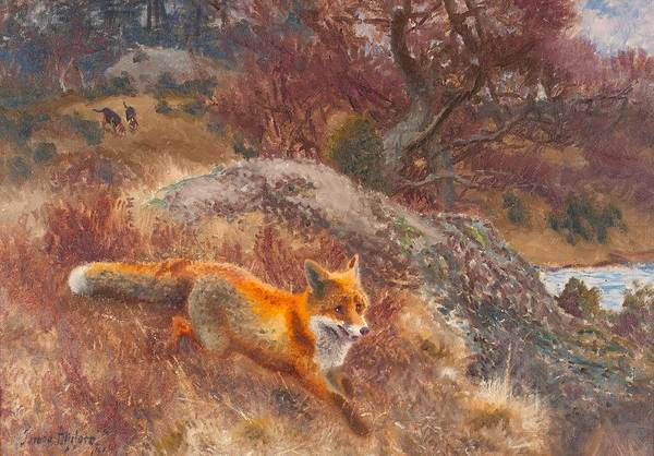 Painting - Fox With Hounds by Celestial Images