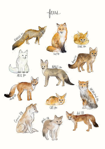 Wall Art - Painting - Foxes by Amy Hamilton