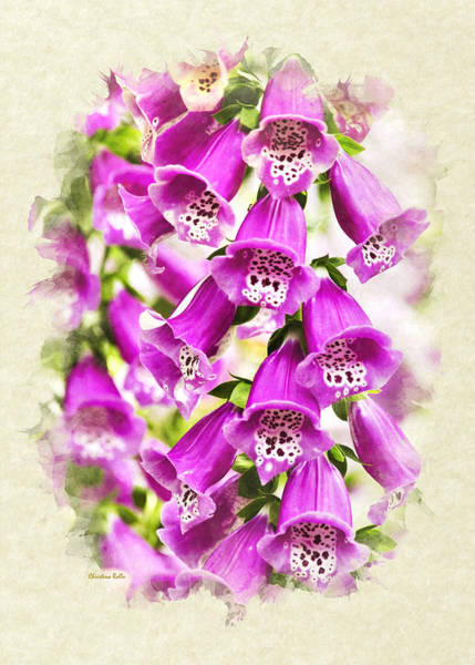 Photograph - Foxglove Flowers Blank Note Card by Christina Rollo
