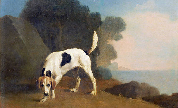 Scent Photograph - Foxhound On The Scent by George Stubbs