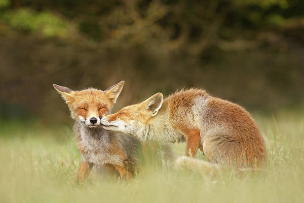 Relation Photograph - Foxy Love Series - Kiss by Roeselien Raimond