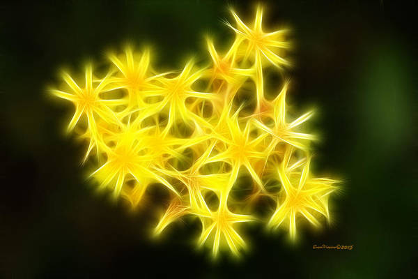 Photograph - Fractal Flower by Ericamaxine Price