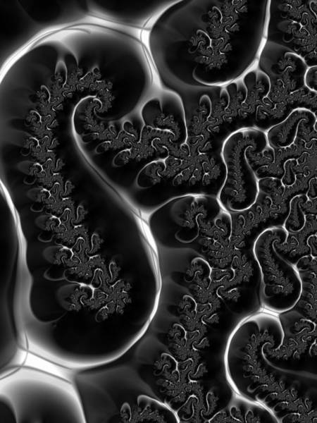 Digital Art - Fractal Veins Black And White by Matthias Hauser