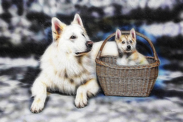 Photograph - Fractalius Huskies by Ericamaxine Price