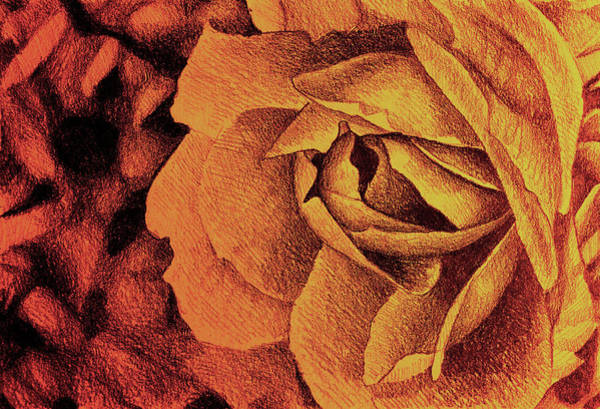 Juicy Drawing - Fragrant Rose, Colorful Drawing With Delicate Rose Petals by Oana Unciuleanu