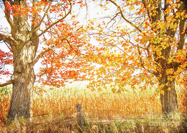 Photograph - Framed By Fall by Hal Halli