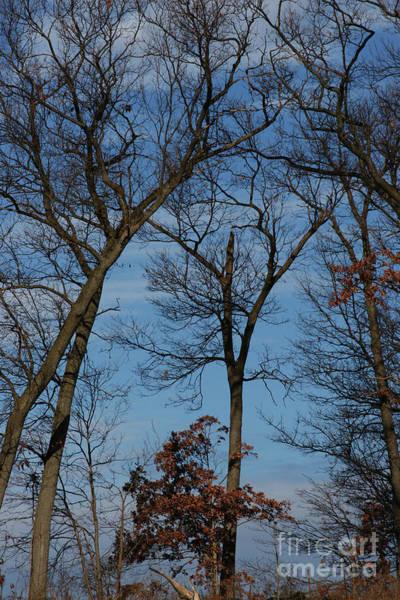 Photograph - Framed In Oak - 1 by Linda Shafer