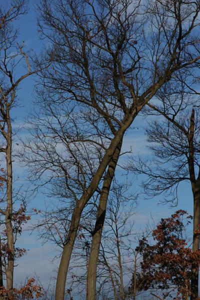Photograph - Framed In Oak - 2 by Linda Shafer
