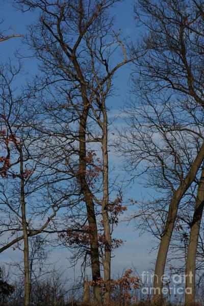 Photograph - Framed In Oak - 3 by Linda Shafer
