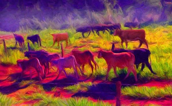 Franca Cattle 1 Art Print