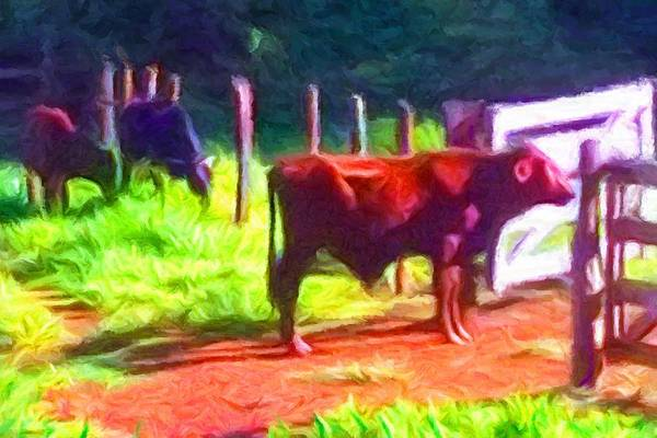 Franca Cattle 2 Art Print