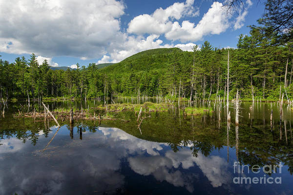 Photograph - Franconia Brook Trail - Pemigewasset Wilderness New Hampshire by Erin Paul Donovan
