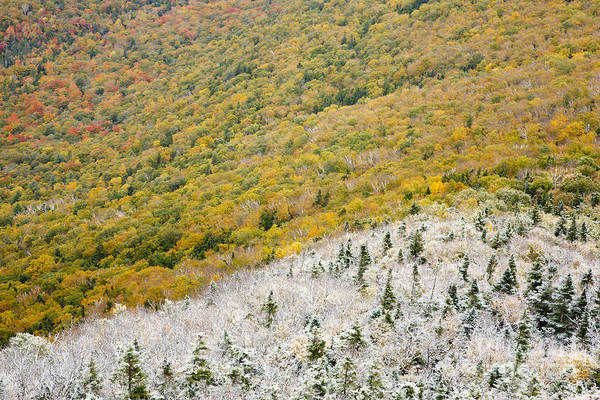 Photograph - Franconia Notch State Park - White Mountains Nh Usa Autumn by Erin Paul Donovan