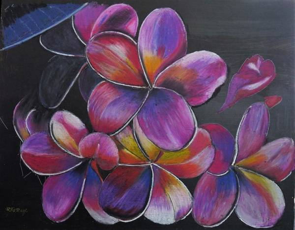 Pastel - Frangipani  by Richard Le Page