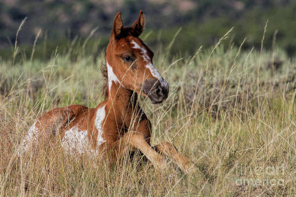 Photograph - Freckle Face Filly by Jim Garrison