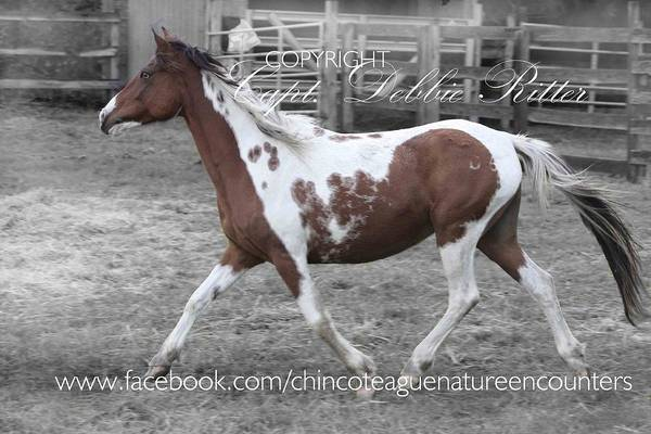 Photograph - Freckles In Her Glory by Captain Debbie Ritter