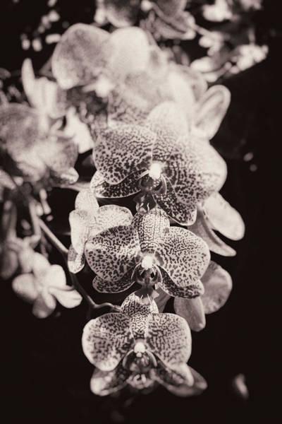 Floristry Photograph - Freckled Beauty by Zina Zinchik