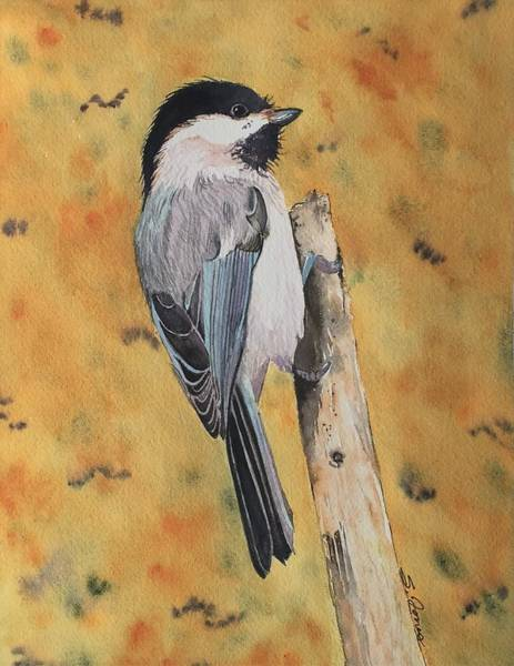 Painting - Free Bird by Sonja Jones