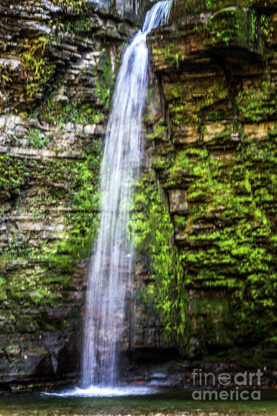 Photograph - Free Fall by William Norton