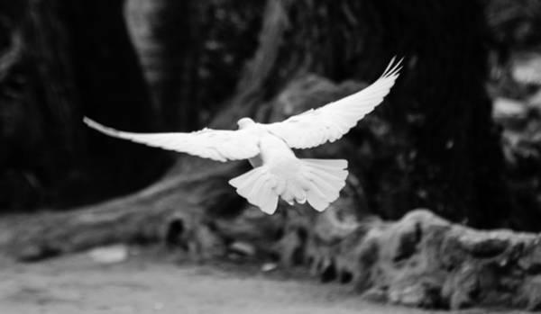 Photograph - Free Like The Wind by Andrea Mazzocchetti