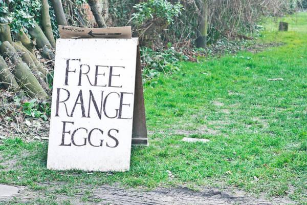 Smallholding Photograph - Free Range Eggs by Tom Gowanlock