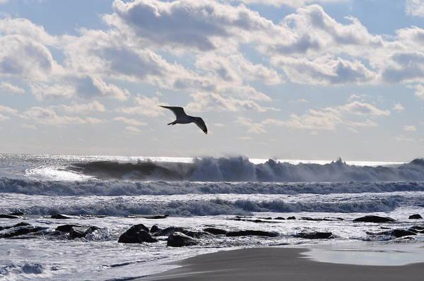 Ocean Grove Photograph - Free Spirit by Joe  Burns