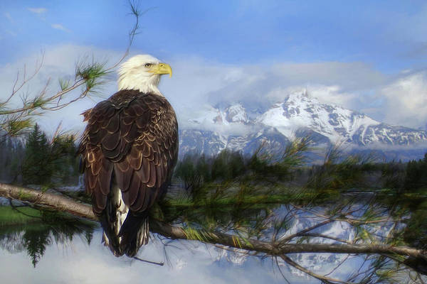 Bald Mountain Photograph - Free Spirit by Lori Deiter