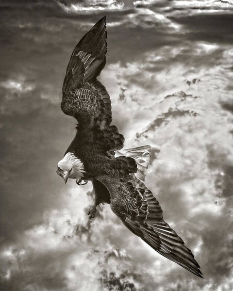 Photograph - Freedom Above The Clouds by Wes and Dotty Weber