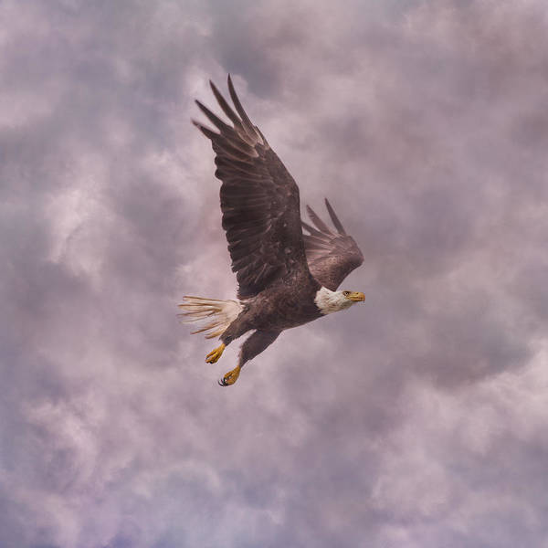 Flying Eagle Photograph - Freedom Justice Forever by Betsy Knapp
