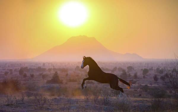 Photograph - Freedom Of Rajasthan by Ekaterina Druz